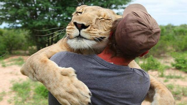 撒娇母狮讨抱抱 感动千万人[1]- 中国日报网