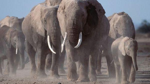 震惊!40余年全球野生动物数量减少58% - 中国日报网