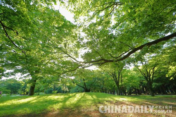 公园为什么重要?研究显示亲近自然大大提升脑力 - 中国日报网