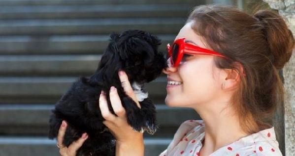 研究:主人心情如何从狗狗的行为就能看出来 - 中国日报网