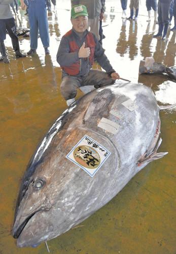 日本和歌山县捕获巨型金枪鱼 体型庞大破记录(图) - 中国日报网
