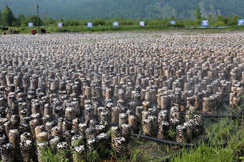 大兴安岭加速转型大力发展林下经济 促进增收