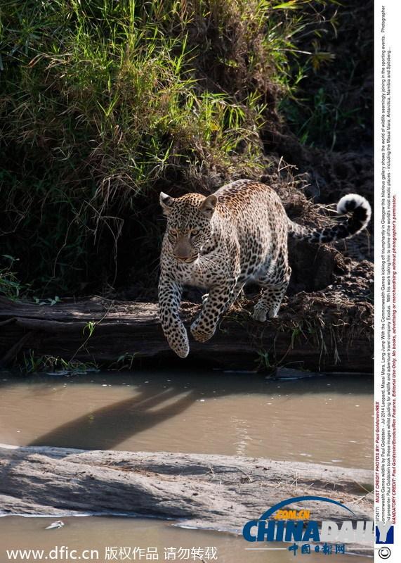 """动物参加""""运动会"""" 跳高跳远跑步游泳样样精通"""