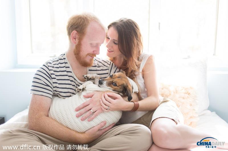 当地时间2014年8月1日,一对来自美国阿拉巴马州的夫妇让他们的宠物狗扮演婴儿,拍摄了一组搞笑的家庭写真。在照片中,来自的Jan和Chase Renegar抱着他们的杰克罗素梗Snuggles,模仿了一系列宝宝写真的经典pose。这组照片的摄影师是Jamie Clauss。Snuggles喜欢被裹起来抱着,在拍摄过程中,它十分享受,还舒服地睡着了。 (图片来源:东方IC)