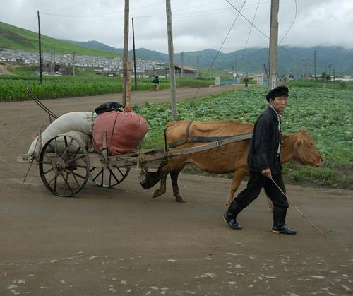 朝鲜农民生活照(资料图)
