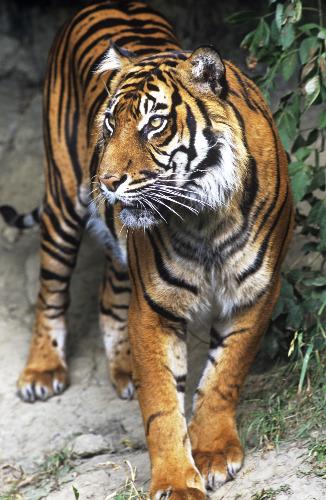 盘点世界10大濒临灭绝野生动物[4]