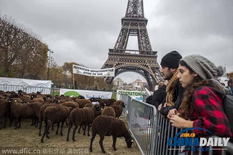法国农民赶羊群在埃菲尔铁塔抗议狼患[5]