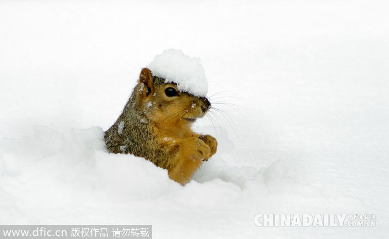 看看动物们如何在雪地里撒欢卖萌