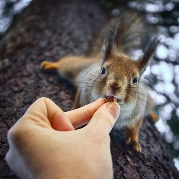 芬兰摄影师捕捉喂食野生动物瞬间
