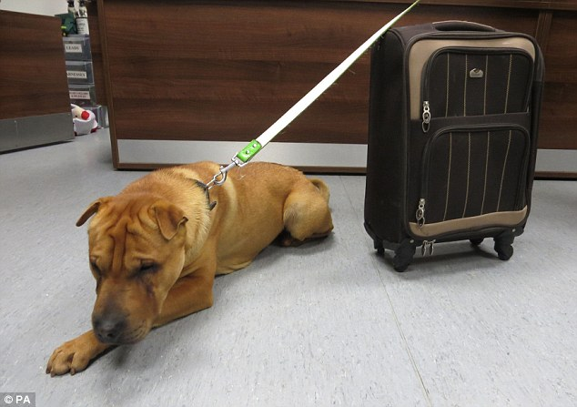 英国小狗被弃车站伤心流泪