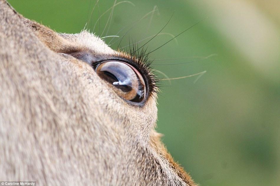 哺乳动物摄影大赛优秀作品