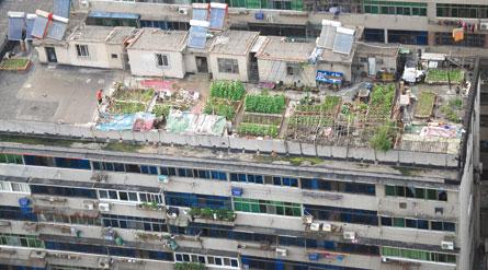 屋顶面积属于公用面积,种菜属于改变原有规划,属于违规行为.-图片