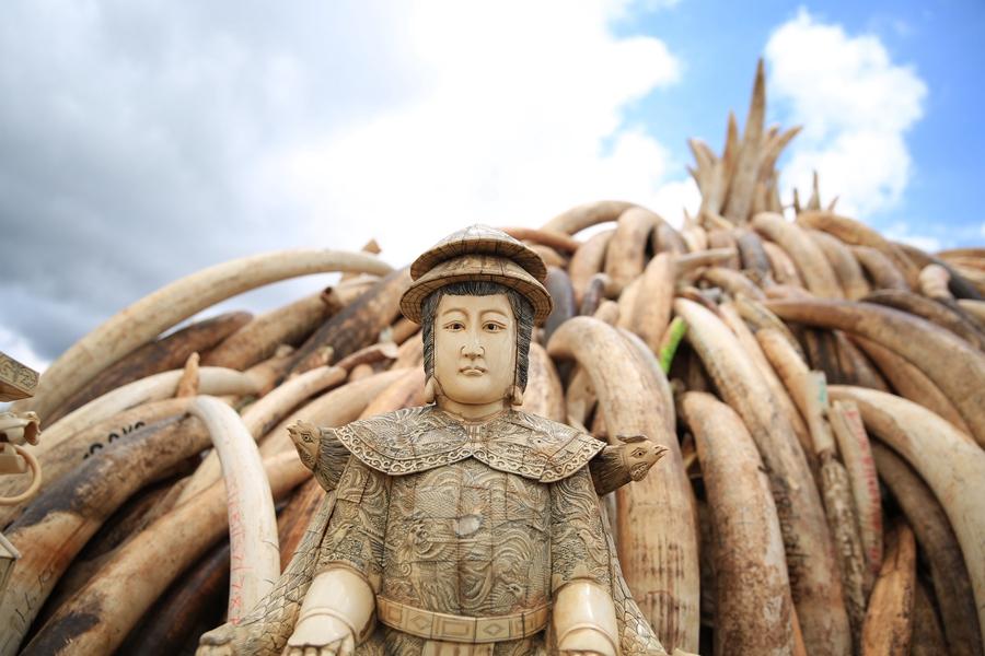 销毁象牙_肯尼亚将销毁105吨象牙 仪式准备已完成[5]- 中国日报网