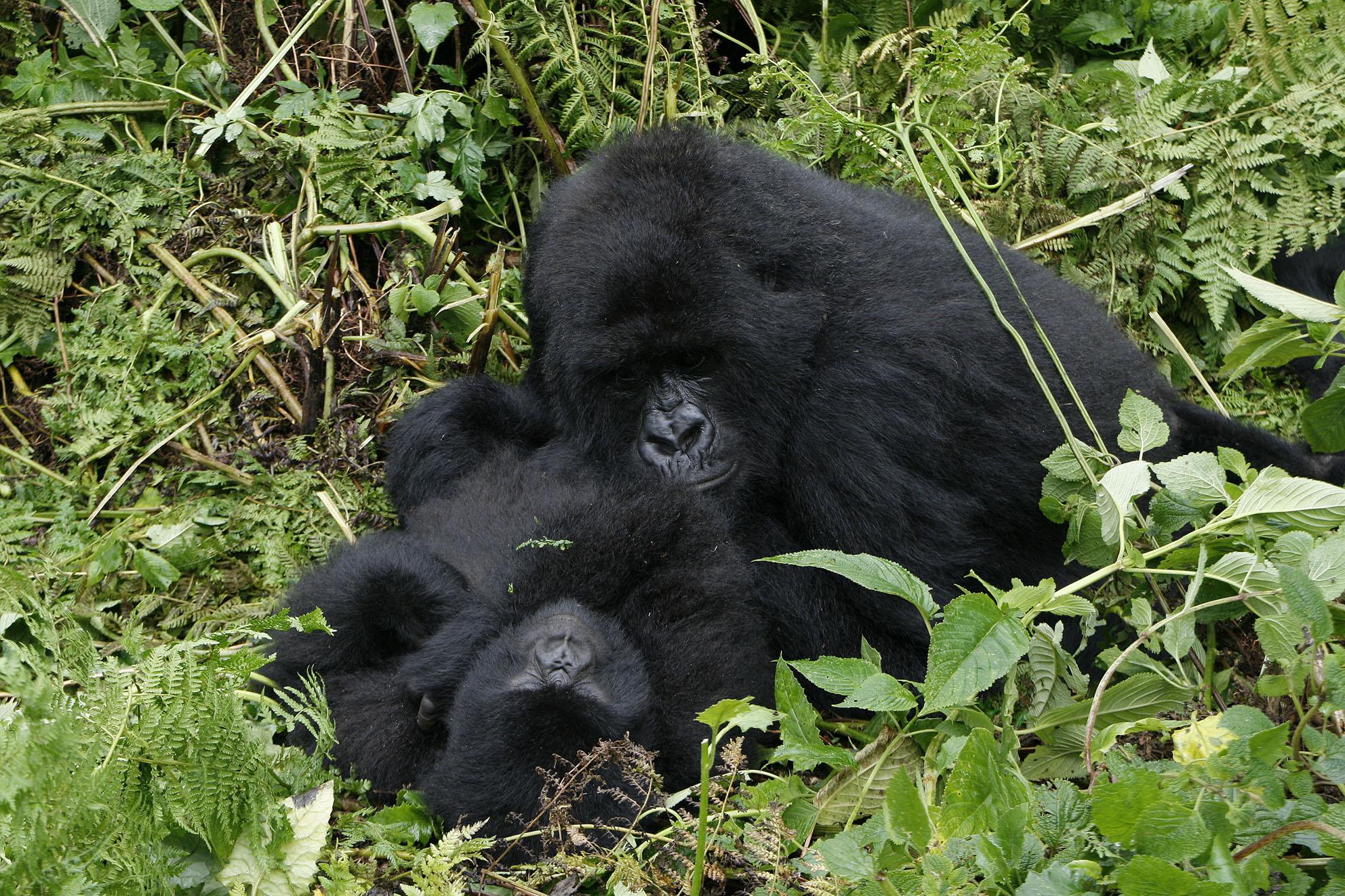 国际生物多样性日 小编带你认识珍稀濒危野生动物