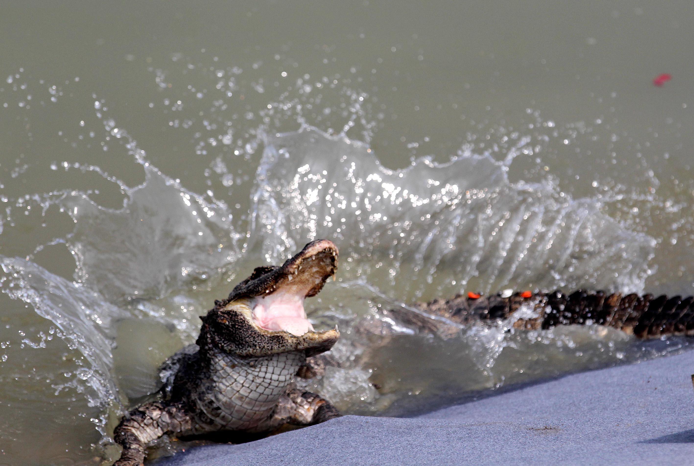 国际生物多样性日:认识珍稀濒危野生动物
