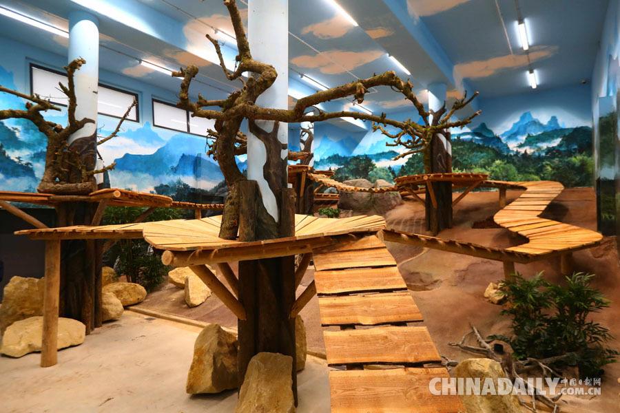 组图:荷兰动物园热盼中国大熊猫