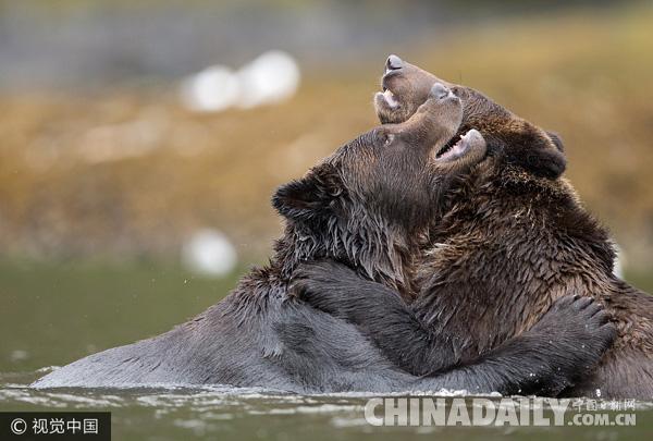 遇到黑熊怎么办 他靠两条腿狂奔逃生