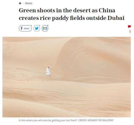 """迪拜沙漠�N出""""中��稻""""!外媒�c�中��海水稻突破"""