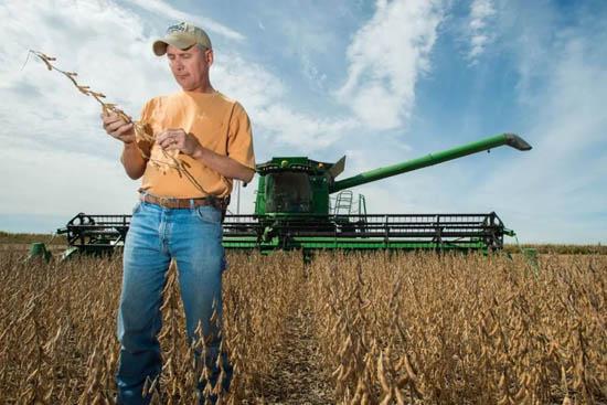 【国际锐评】欧洲没胃口吃下被中国拒绝了的美国大豆