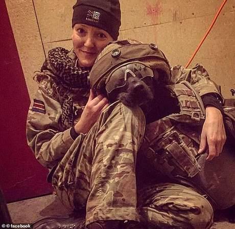 令人唏嘘!英国上千军犬退役后惨遭处死