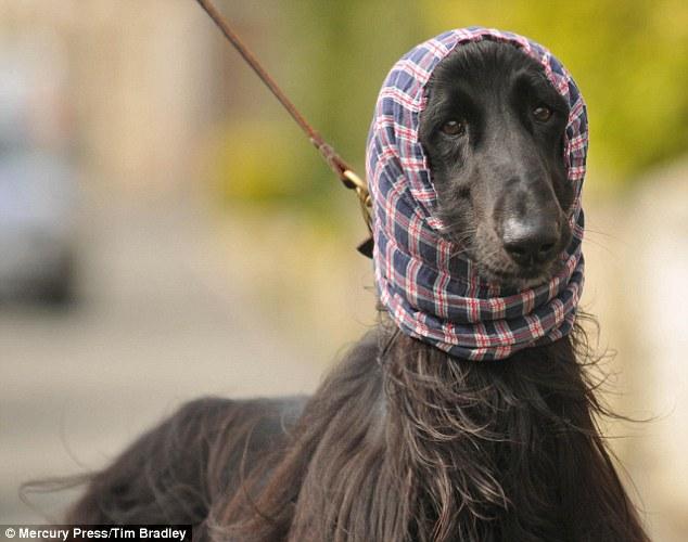 戴发/狗狗戴发带乖巧可爱。(图片来源:英国《每日邮报》)